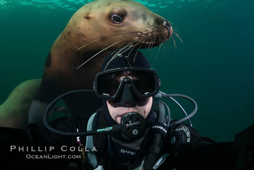 Selfie with Steller sea lion underwater, Norris Rocks, Hornby Island, British Columbia, Canada., Eumetopias jubatus, natural history stock photograph, photo id 32682