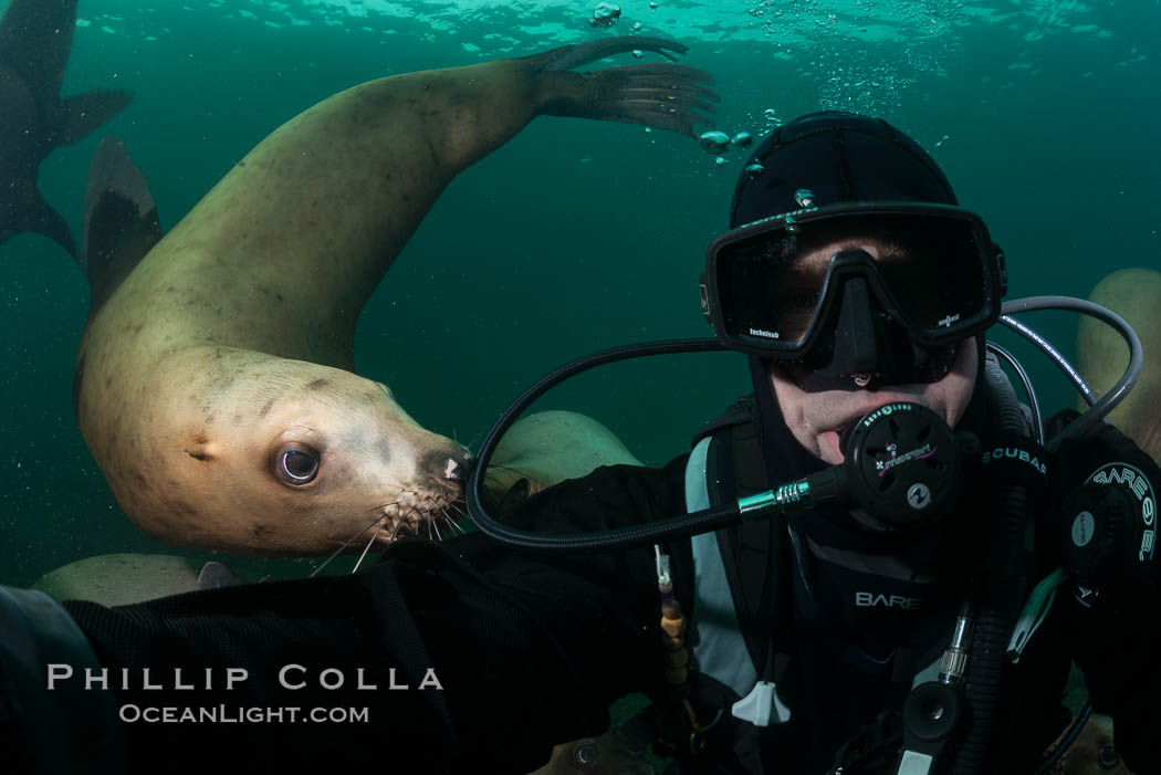Selfie with Steller sea lion underwater, Norris Rocks, Hornby Island, British Columbia, Canada. Hornby Island, British Columbia, Canada, Eumetopias jubatus, natural history stock photograph, photo id 32738