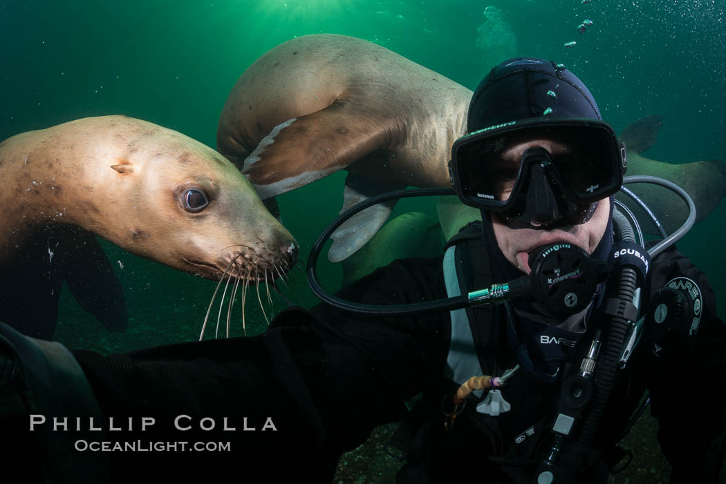 Selfie with Steller sea lion underwater, Norris Rocks, Hornby Island, British Columbia, Canada. Hornby Island, British Columbia, Canada, Eumetopias jubatus, natural history stock photograph, photo id 32794
