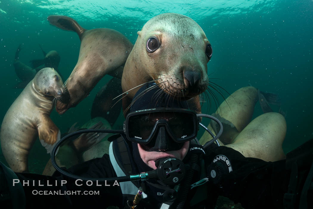 Selfie with Steller sea lion underwater, Norris Rocks, Hornby Island, British Columbia, Canada., Eumetopias jubatus, natural history stock photograph, photo id 32684