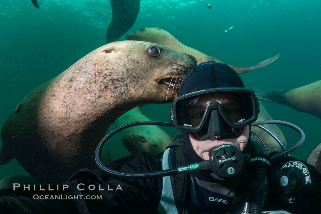 Selfie with Steller sea lion underwater, Norris Rocks, Hornby Island, British Columbia, Canada. Hornby Island, British Columbia, Canada, Eumetopias jubatus, natural history stock photograph, photo id 32796
