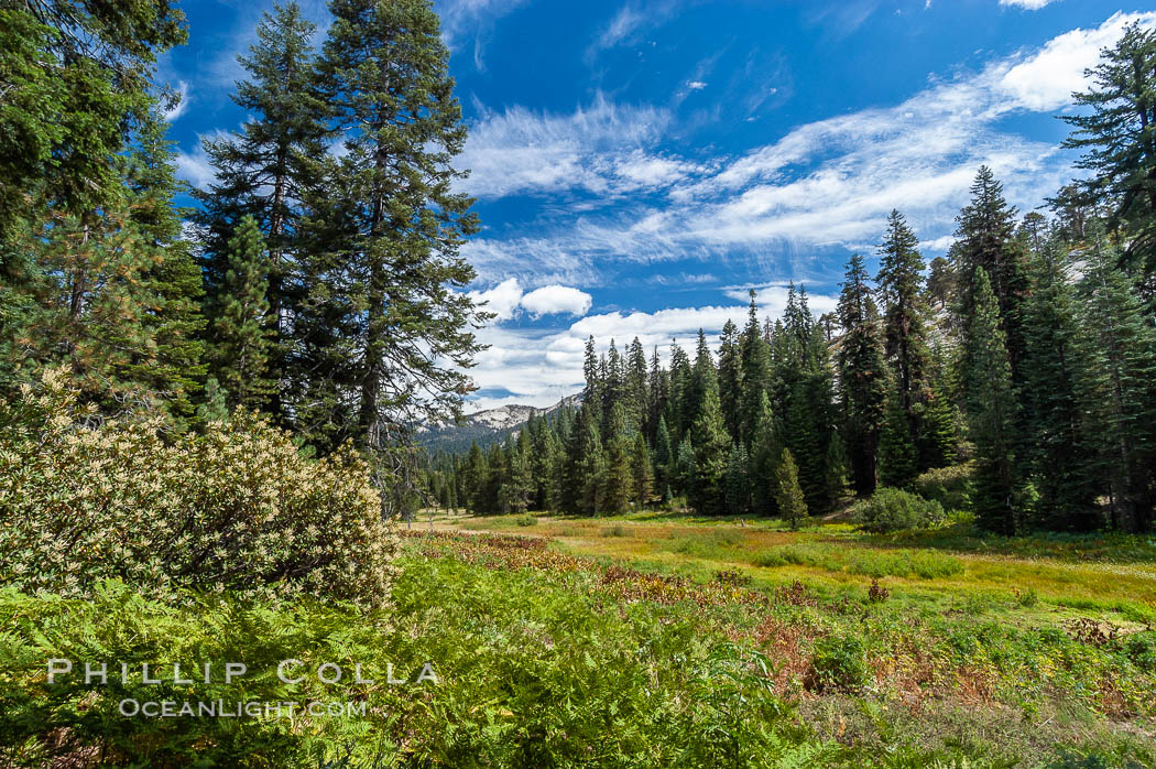 Long Meadow in late summer. Sequoia Kings Canyon National Park, California, USA, natural history stock photograph, photo id 09894