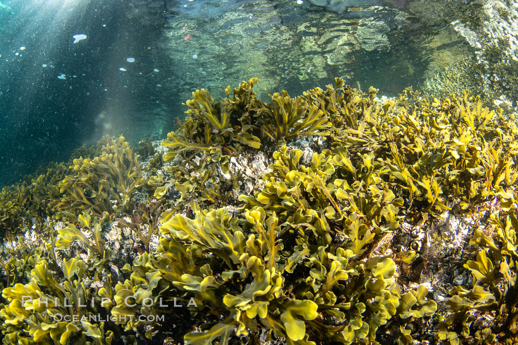 Shallow water reef with coniferous forest hanging over the water, Browning Pass, Vancouver Island. British Columbia, Canada, natural history stock photograph, photo id 35308