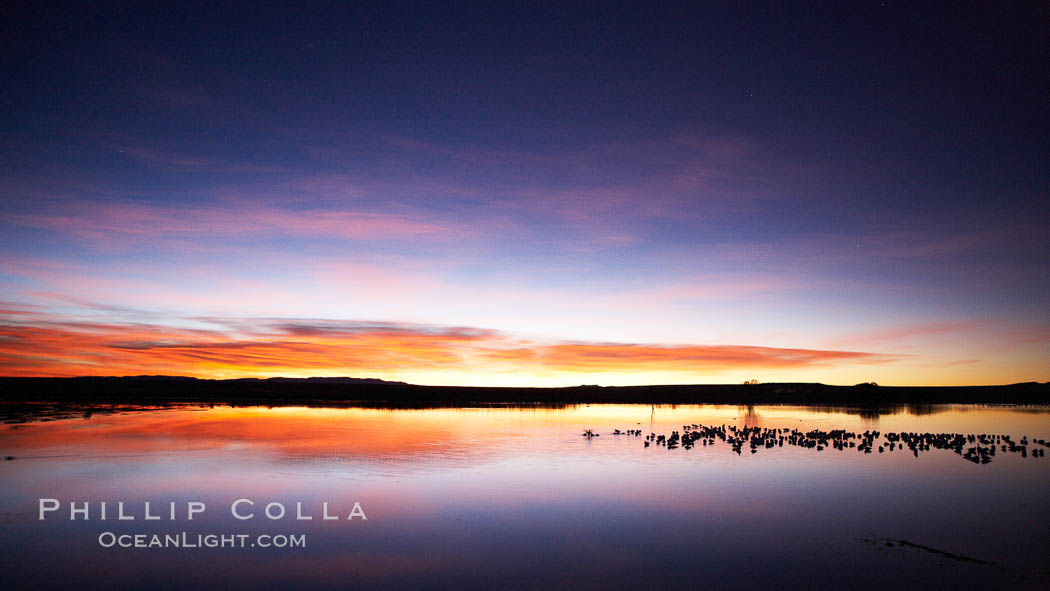 Sunrise over Bosque del Apache.  Rich predawn colors are reflected in the main impoundment pond in the refuge.  Snow geese are seen resting on the water. Bosque del Apache National Wildlife Refuge, Socorro, New Mexico, USA, Chen caerulescens, natural history stock photograph, photo id 21958