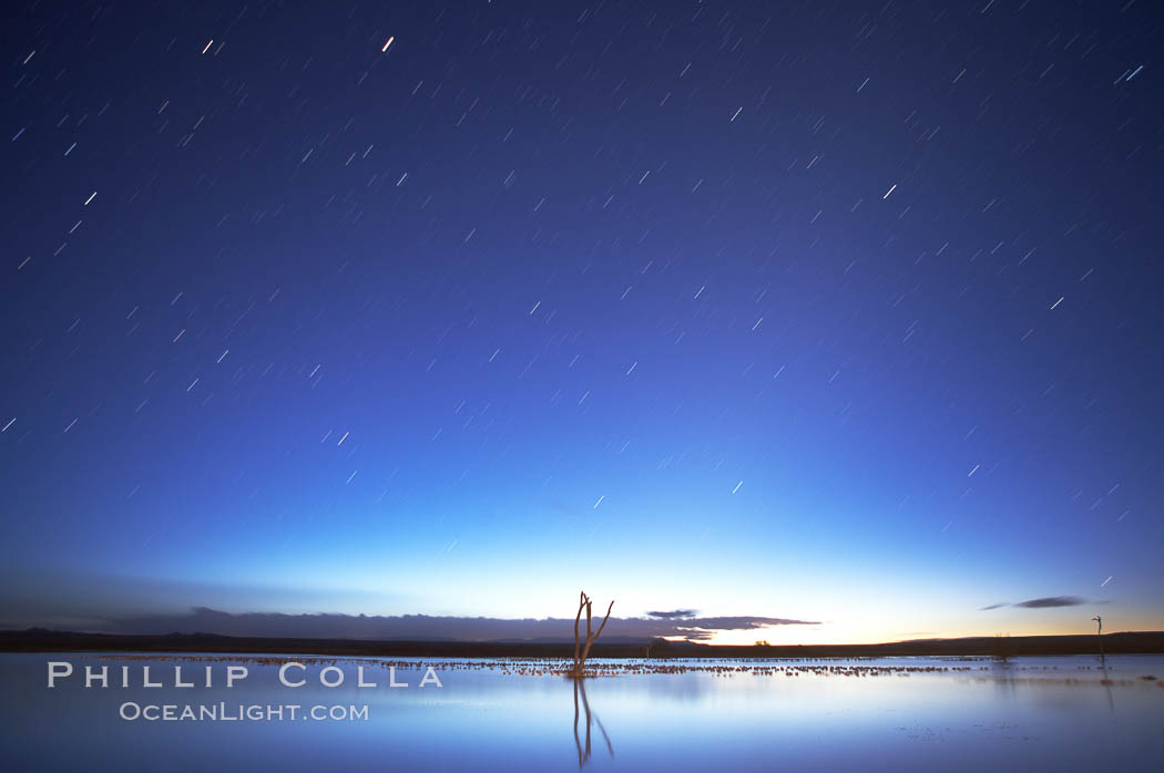 Star trails at dawn.  Stars are blurred into lines in this time exposure in pre-dawn light at the main impoundment pond, Bosque del Apache National Wildlife Refuge.  A group of snow geese can be seen resting on the water. Bosque del Apache National Wildlife Refuge, Socorro, New Mexico, USA, Chen caerulescens, natural history stock photograph, photo id 21978