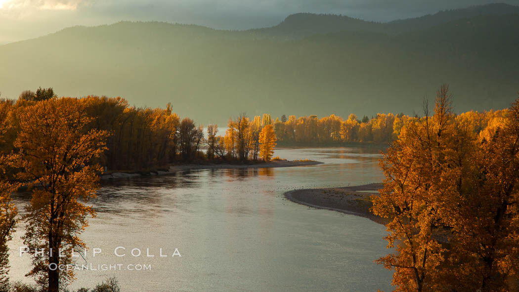 Fall colors along Little Shuswap Lake, near the Adams River. Adams River, Roderick Haig-Brown Provincial Park, British Columbia, Canada, Oncorhynchus nerka, natural history stock photograph, photo id 26185