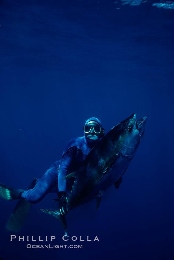 Joe Tobin and speared yellowfin tuna. Guadalupe Island (Isla Guadalupe), Baja California, Mexico, natural history stock photograph, photo id 02111