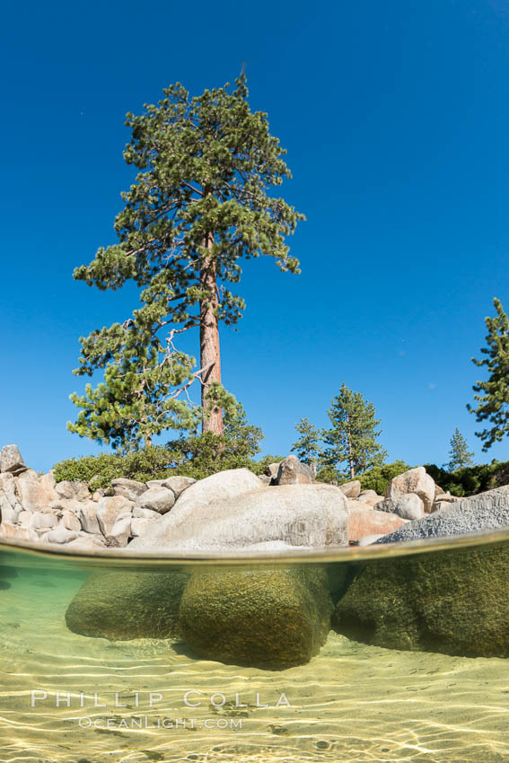 Split view of Trees and Underwater Boulders, Lake Tahoe, Nevada. USA, natural history stock photograph, photo id 32330