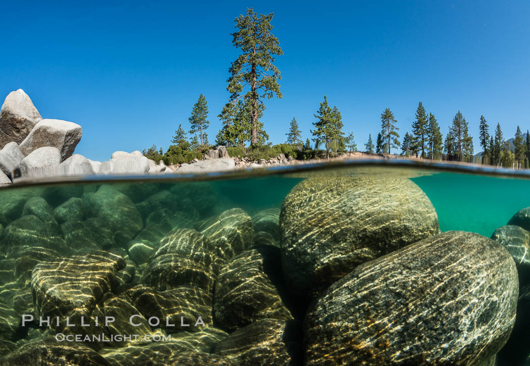 Image 32335, Split view of Trees and Underwater Boulders, Lake Tahoe, Nevada. Lake Tahoe, Nevada, USA, Phillip Colla, all rights reserved worldwide. Keywords: california, lake, lake tahoe, nevada, sierra nevada, tahoe, underwater.