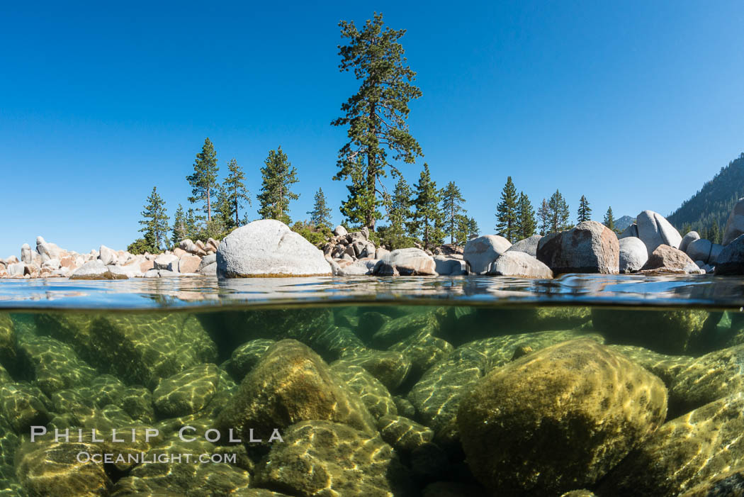 Split view of Trees and Underwater Boulders, Lake Tahoe, Nevada. USA, natural history stock photograph, photo id 32339