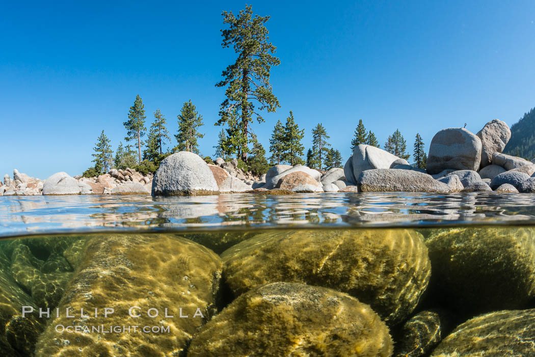 Image 32337, Split view of Trees and Underwater Boulders, Lake Tahoe, Nevada. Lake Tahoe, Nevada, USA, Phillip Colla, all rights reserved worldwide. Keywords: california, lake, lake tahoe, nevada, sierra nevada, tahoe, underwater.