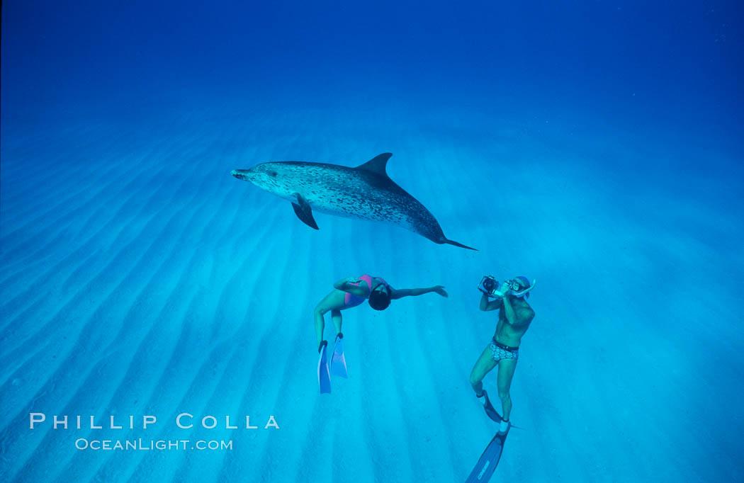 Atlantic spotted dolphin, swimmer Mikako Kotani, videographer Harrison Stubbs. Bahamas, Stenella frontalis, natural history stock photograph, photo id 02021