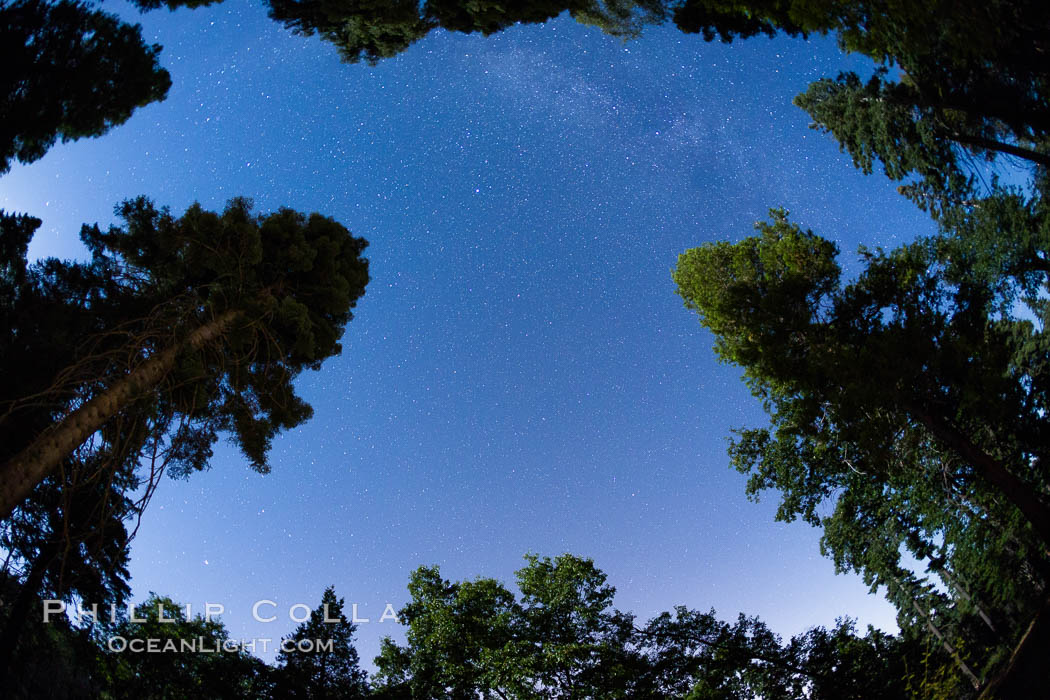 Stars and Trees, Milky Way, Palomar Mountain State Park. Palomar Mountain State Park, California, USA, natural history stock photograph, photo id 28750