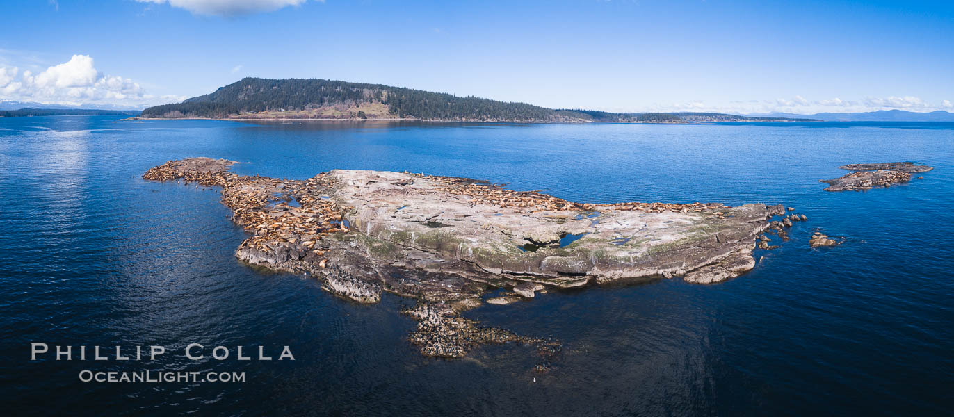 Steller Sea Lions atop Norris Rocks, Hornby Island in the distance, panoramic photo. British Columbia, Canada, Eumetopias jubatus, natural history stock photograph, photo id 34467