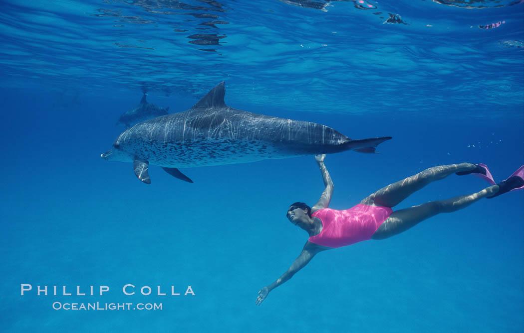 Atlantic spotted dolphin, Olympic swimmer Mikako Kotani. Bahamas, Stenella frontalis, natural history stock photograph, photo id 00645