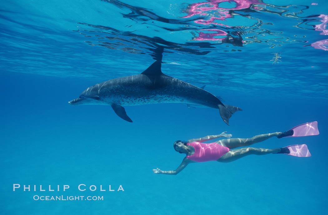 Atlantic spotted dolphin, Olympic swimmer Mikako Kotani. Bahamas, Stenella frontalis, natural history stock photograph, photo id 00649