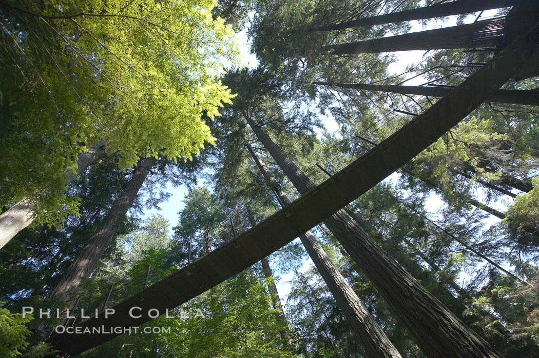 Suspension bridge in forest of Douglas fir and Western hemlock trees. Capilano Suspension Bridge, Vancouver, British Columbia, Canada, natural history stock photograph, photo id 21148