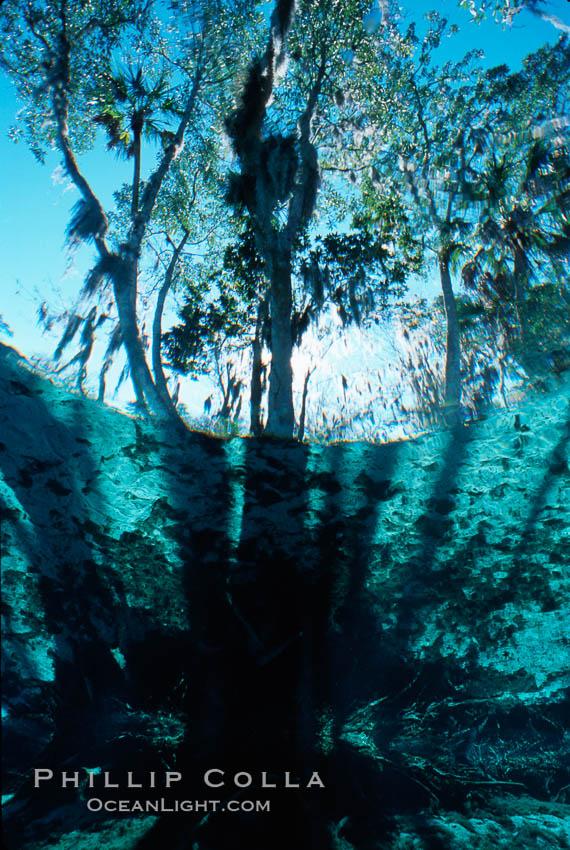Three Sisters Springs. Three Sisters Springs, Crystal River, Florida, USA, natural history stock photograph, photo id 02672