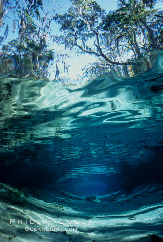 Three Sisters Springs depicted in an underwater landscape with sand, clear water and trees. Crystal River, Florida, USA, natural history stock photograph, photo id 02673