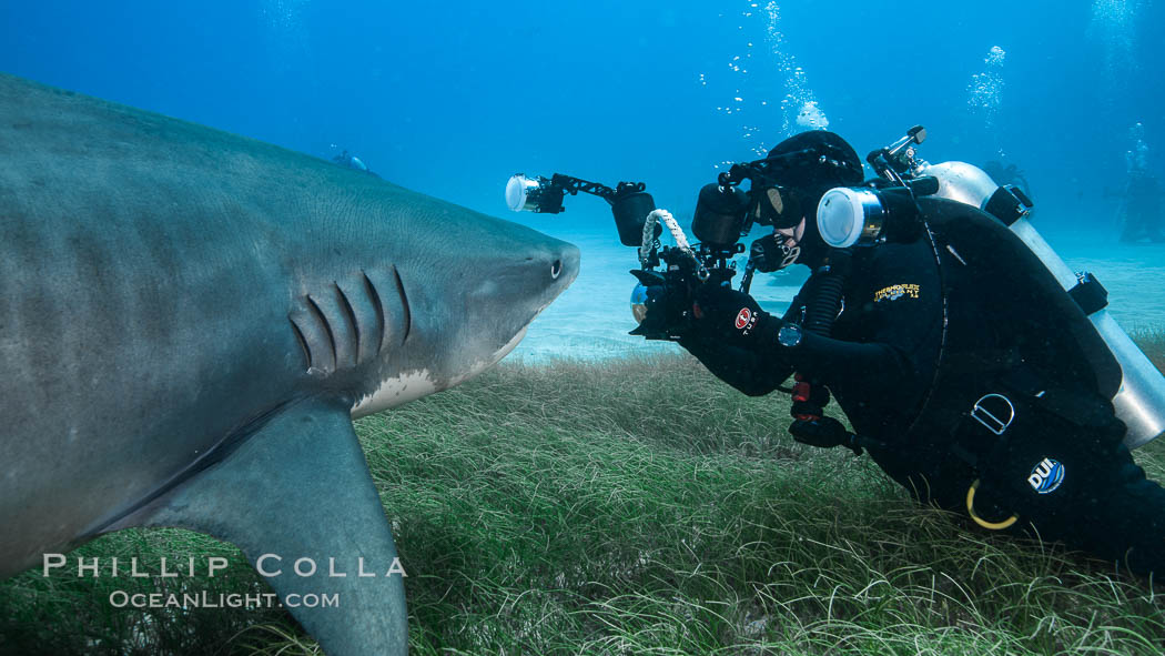 Tiger shark and underwater photographer. Bahamas, Galeocerdo cuvier, natural history stock photograph, photo id 31943