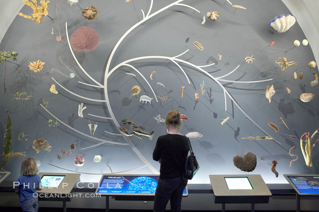 Visitors admire the Tree of Life display at the Milstein Hall of Ocean Life, American Museum of Natural History. New York City, USA, natural history stock photograph, photo id 11231