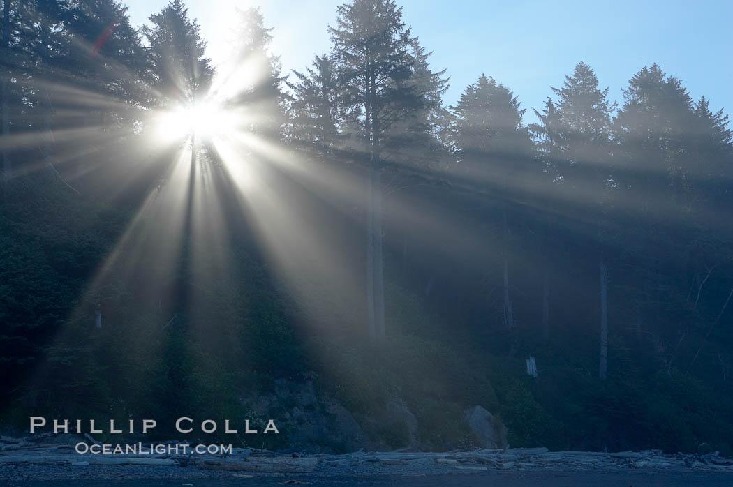 Trees, morning light and mist. Ruby Beach, Olympic National Park, Washington, USA, natural history stock photograph, photo id 13819