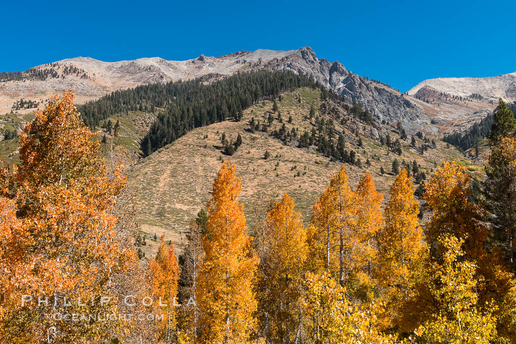 Aspens show fall colors in Mineral King Valley, part of Sequoia National Park in the southern Sierra Nevada, California. USA, natural history stock photograph, photo id 32294