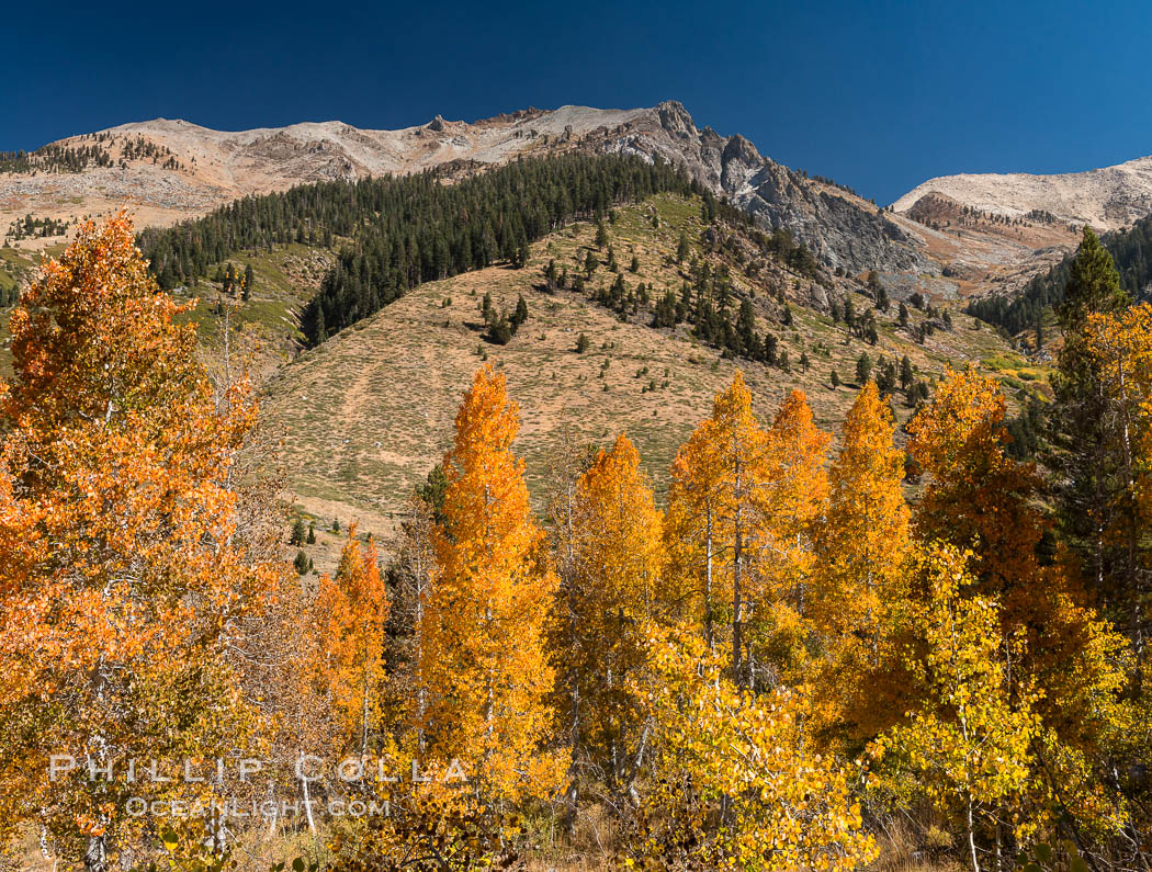 Aspens show fall colors in Mineral King Valley, part of Sequoia National Park in the southern Sierra Nevada, California. USA, natural history stock photograph, photo id 32292