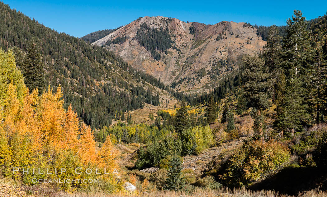 Aspens show fall colors in Mineral King Valley, part of Sequoia National Park in the southern Sierra Nevada, California. USA, natural history stock photograph, photo id 32279
