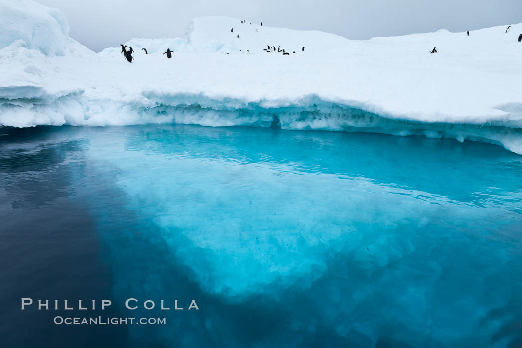 Image 24781, The underwater edge of an iceberg, with a few Adelie penguins on it. Brown Bluff, Antarctic Peninsula, Antarctica, Phillip Colla, all rights reserved worldwide. Keywords: antarctic peninsula, antarctica, berg, brown bluff, cold, frozen, ice, ice berg, iceberg, landscape, ocean, oceans, outdoors, outside, scene, scenery, sea, seascape, southern ocean, view, water.