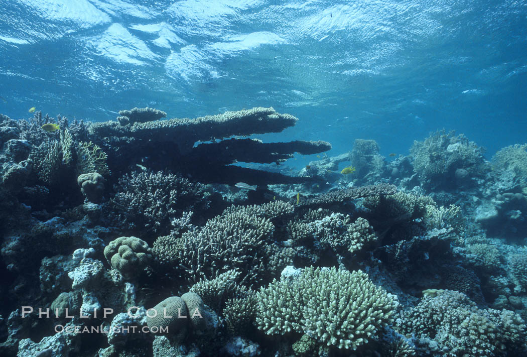 Various hard corals on coral reef, Northern Red Sea. Egyptian Red Sea, natural history stock photograph, photo id 05546
