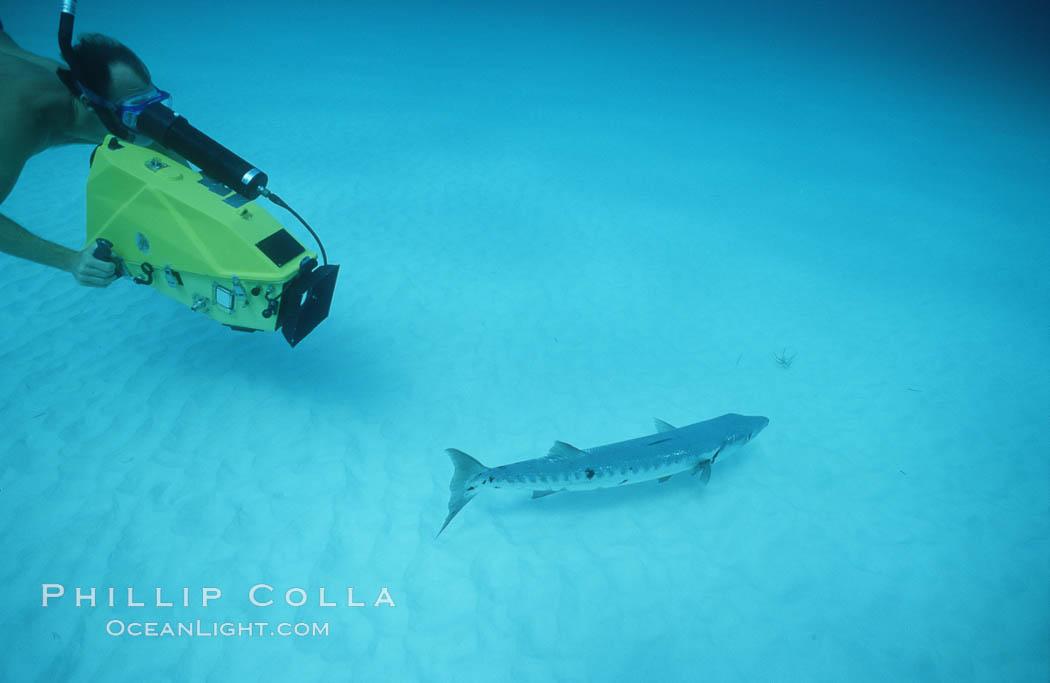 Videographer and barracuda. Bahamas, natural history stock photograph, photo id 02996