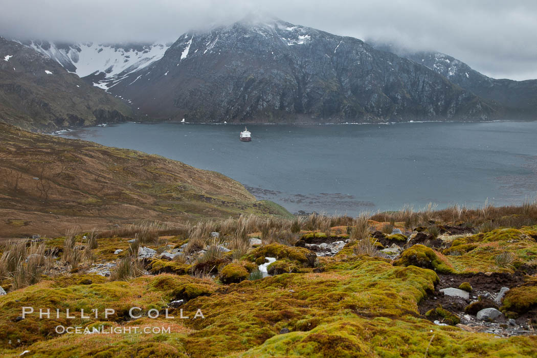"View of Godthul, from the grassy slopes of South Georgia.  The name Godthul, or ""Good Hollow"", dates back to Norwegian whalers who used this bay as a anchorage. South Georgia Island, natural history stock photograph, photo id 24717"