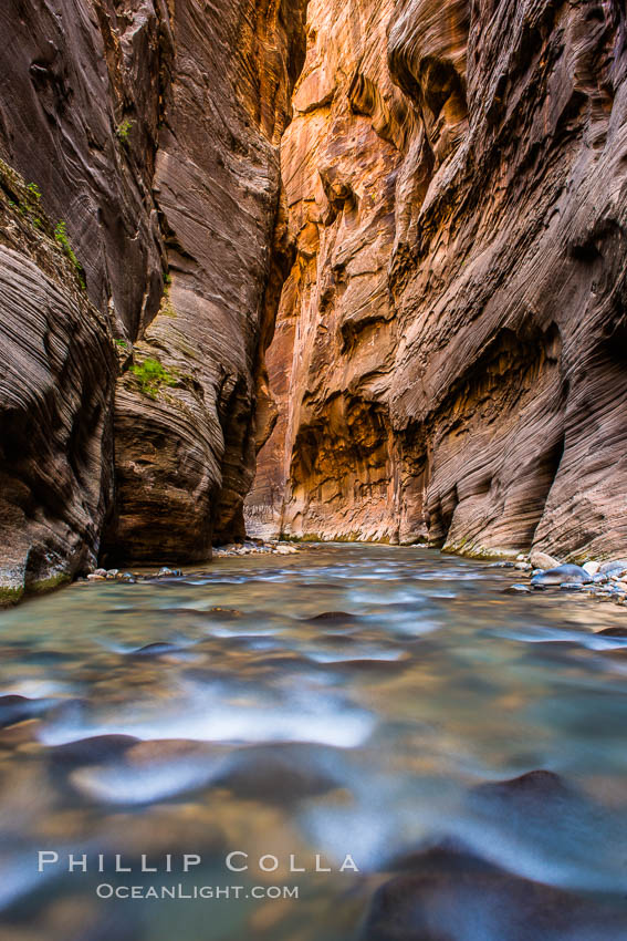 The Virgin River Narrows, where the Virgin River has carved deep, narrow canyons through the Zion National Park sandstone, creating one of the finest hikes in the world. Virgin River Narrows, Zion National Park, Utah, USA, natural history stock photograph, photo id 28578