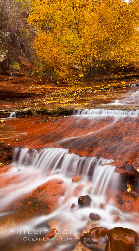 Image 26099, Small waterfalls and autumn trees, along the left fork in North Creek Canyon, with maple and cottonwood trees turning fall colors. Zion National Park, Utah, USA, Phillip Colla, all rights reserved worldwide. Keywords: national parks, portfolio, usa, utah, zion national park.