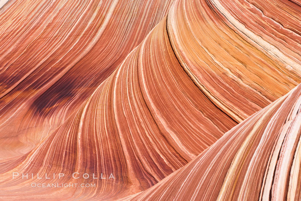 The Wave, an area of fantastic eroded sandstone featuring beautiful swirls, wild colors, countless striations, and bizarre shapes set amidst the dramatic surrounding North Coyote Buttes of Arizona and Utah.  The sandstone formations of the North Coyote Buttes, including the Wave, date from the Jurassic period. Managed by the Bureau of Land Management, the Wave is located in the Paria Canyon-Vermilion Cliffs Wilderness and is accessible on foot by permit only. USA, natural history stock photograph, photo id 20649