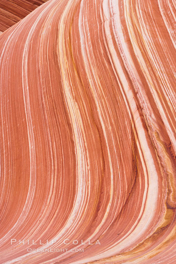 The Wave, an area of fantastic eroded sandstone featuring beautiful swirls, wild colors, countless striations, and bizarre shapes set amidst the dramatic surrounding North Coyote Buttes of Arizona and Utah.  The sandstone formations of the North Coyote Buttes, including the Wave, date from the Jurassic period. Managed by the Bureau of Land Management, the Wave is located in the Paria Canyon-Vermilion Cliffs Wilderness and is accessible on foot by permit only. North Coyote Buttes, Paria Canyon-Vermilion Cliffs Wilderness, Arizona, USA, natural history stock photograph, photo id 20666