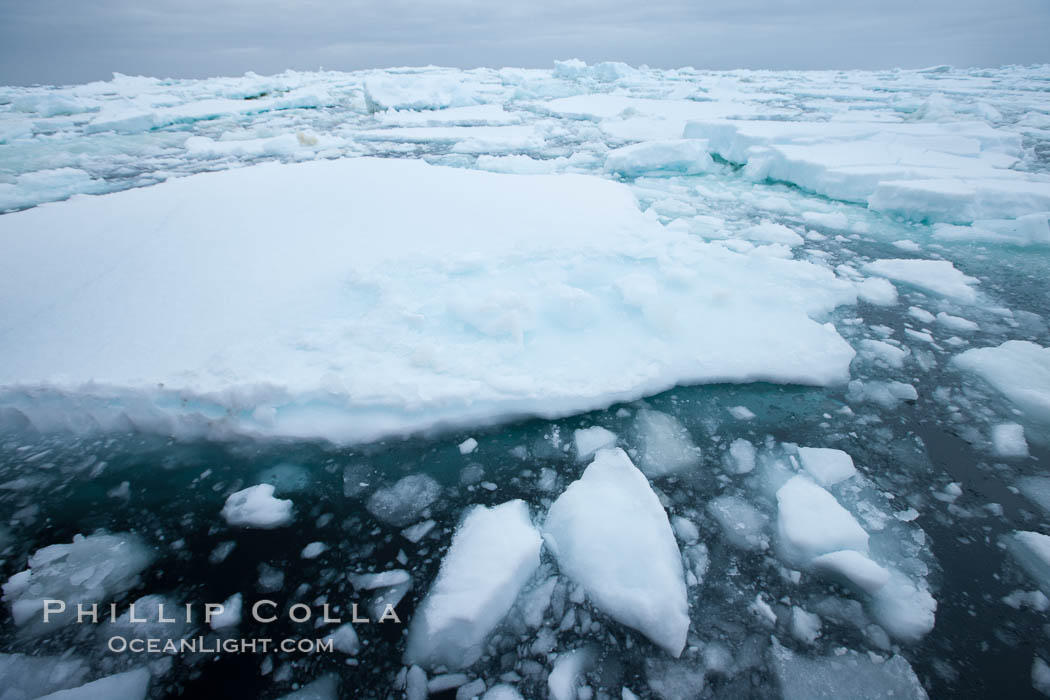 Pack ice and brash ice fills the Weddell Sea, near the Antarctic Peninsula.  This pack ice is a combination of broken pieces of icebergs, sea ice that has formed on the ocean. Southern Ocean, natural history stock photograph, photo id 24914
