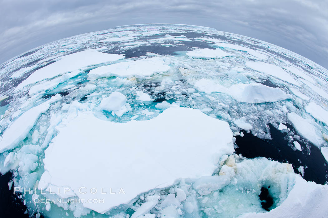 Pack ice and brash ice fills the Weddell Sea, near the Antarctic Peninsula.  This pack ice is a combination of broken pieces of icebergs, sea ice that has formed on the ocean. Southern Ocean, natural history stock photograph, photo id 24838