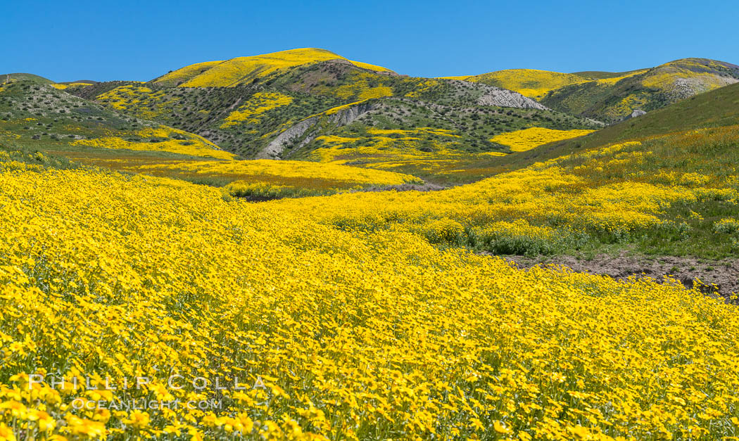 Wildflowers bloom across Carrizo Plains National Monument, during the 2017 Superbloom. Carrizo Plain National Monument, California, USA, natural history stock photograph, photo id 33236