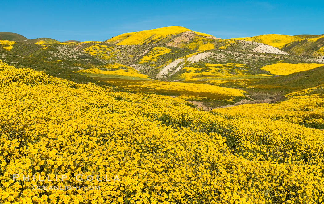 Image 33243, Wildflowers bloom across Carrizo Plains National Monument, during the 2017 Superbloom. Carrizo Plain National Monument, California, USA
