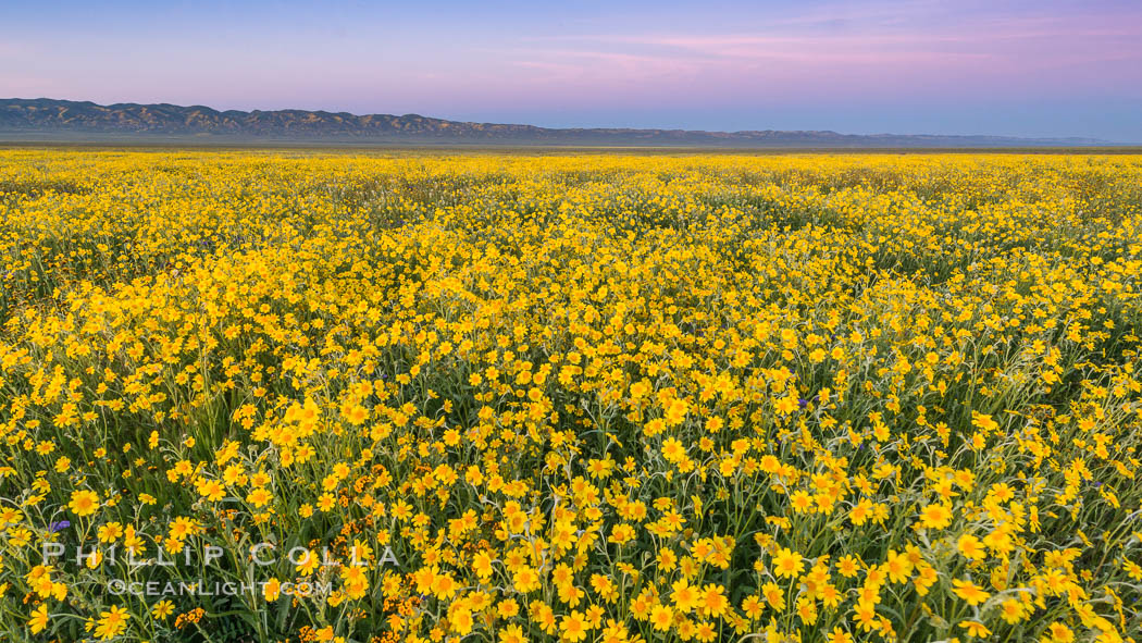 Wildflowers bloom across Carrizo Plains National Monument, during the 2017 Superbloom. Carrizo Plain National Monument, California, USA, natural history stock photograph, photo id 33247