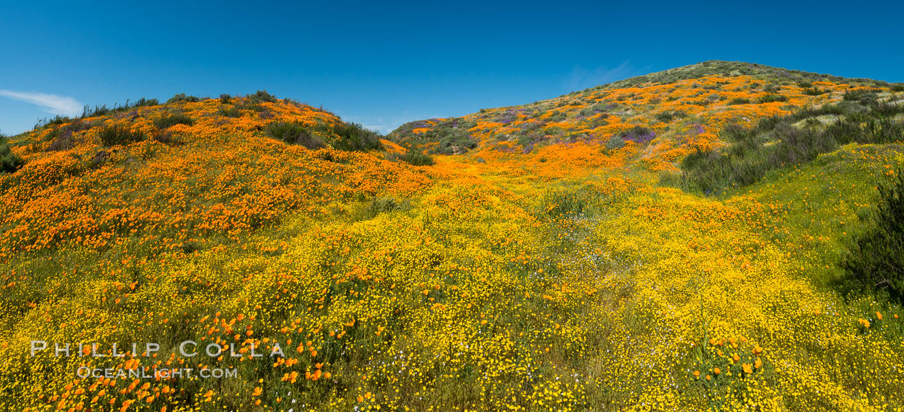 Wildflowers carpets the hills at Diamond Valley Lake, Hemet. Hemet, California, USA, Eschscholzia californica, natural history stock photograph, photo id 33138