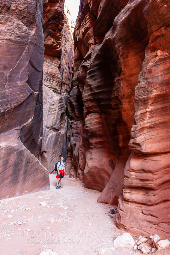 A hiker walking through the Wire Pass narrows.  This exceedingly narrow slot canyon, in some places only two feet wide, is formed by water erosion which cuts slots deep into the surrounding sandstone plateau. Paria Canyon-Vermilion Cliffs Wilderness, Arizona, USA, natural history stock photograph, photo id 20728