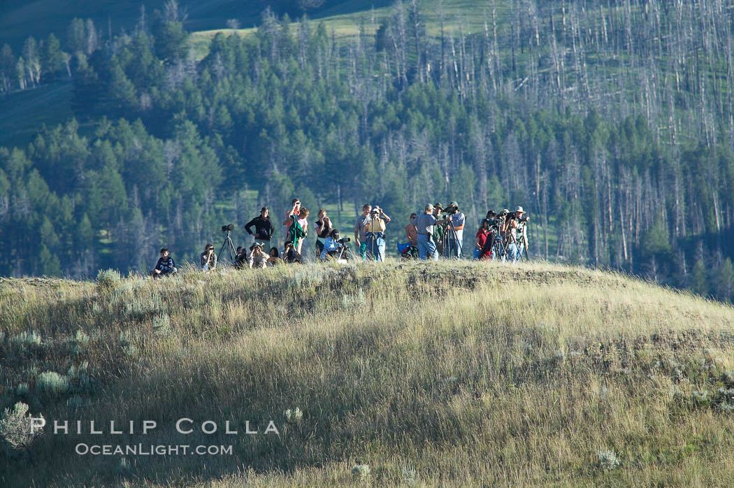 Wolf watchers gather on a bluff near Slough Creek with high power field scopes and binoculars to observe the Slough Creek pack of wolves. Lamar Valley, Yellowstone National Park, Wyoming, USA, natural history stock photograph, photo id 13652