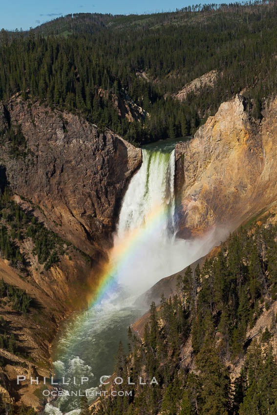 Image 26962, Yellowstone Falls viewed from Lookout Point with a rainbow.  Lower Yellowstone Falls cascades 308' in a thundering plunge into the Grand Canyon of the Yellowstone River. Grand Canyon of the Yellowstone, Yellowstone National Park, Wyoming, USA, Phillip Colla, all rights reserved worldwide. Keywords: canyon, environment, falls, grand canyon of the yellowstone, lower yellowstone falls, national park, nature, outdoors, outside, rainbow, river, scene, scenery, scenic, waterfall, wyoming, yellowstone, yellowstone falls, yellowstone national park, yellowstone river.