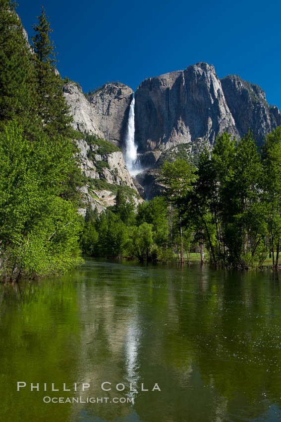 Yosemite Falls reflected in the Merced River, from Swinging Bridge.  The Merced  River is flooded with heavy springtime flow as winter snow melts in the high country above Yosemite Valley. Yosemite National Park, California, USA, natural history stock photograph, photo id 26902