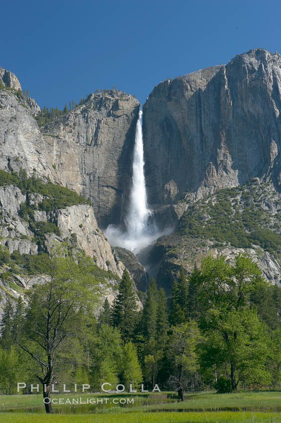 Yosemite Falls rises above Cooks Meadow.  The 2425 falls, the tallest in North America, is at peak flow during a warm-weather springtime melt of Sierra snowpack.  Yosemite Valley. Yosemite Falls, Yosemite National Park, California, USA, natural history stock photograph, photo id 16136