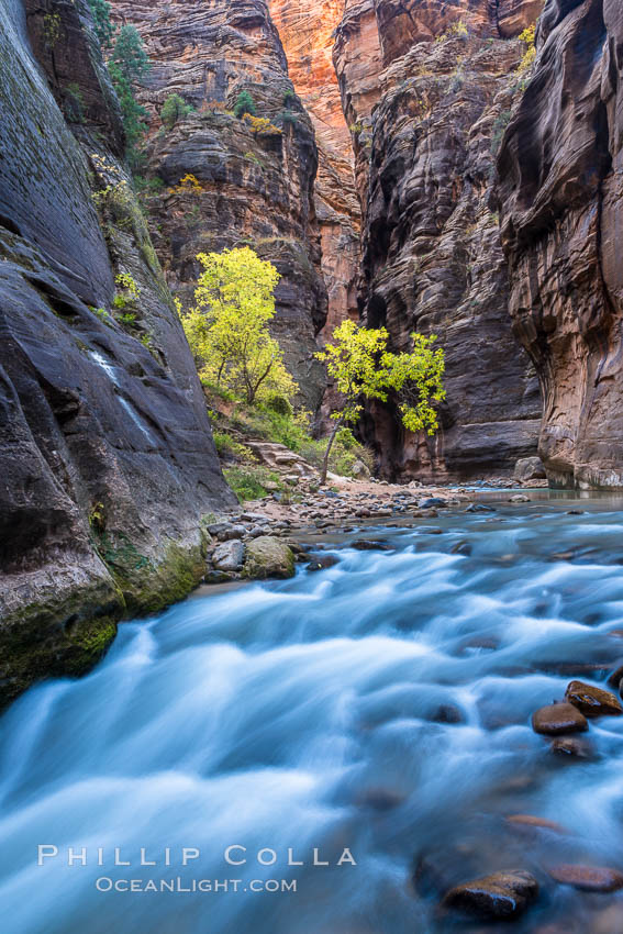 The Virgin River Narrows, where the Virgin River has carved deep, narrow canyons through the Zion National Park sandstone, creating one of the finest hikes in the world. Utah, USA, natural history stock photograph, photo id 32626