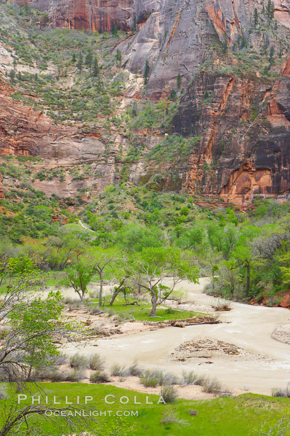 Image 12513, The Virgin River runs swift and deep following spring thunderstorms. The river is colored reddish-brown from the tons of red sandstone silt that it carries out of Zion Canyon as it slowly carves the canyon. Zion National Park, Utah, USA, Phillip Colla, all rights reserved worldwide. Keywords: environment, landscape, national parks, nature, outdoors, outside, river, scene, scenery, scenic, usa, utah, water, zion, zion national park, zion park.